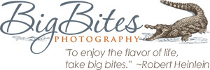 Big Bites Photography