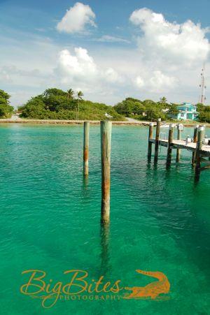 Bahamian-Bird-color-Andros-Island-Bahamas-Big-Bites-Photography.jpg