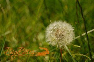 Make-a-Wish-color-Boston-Big-Bites-Photography.jpg