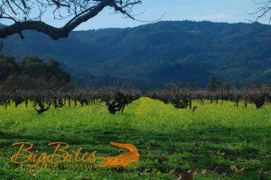 Mustard-Flowers-Napa-Valley-California-Big-Bites-Photography.jpg