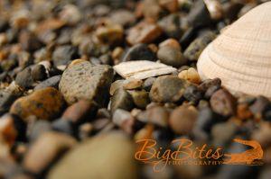 Rocks-and-Shell-color-Big-Bites-Photography.jpg