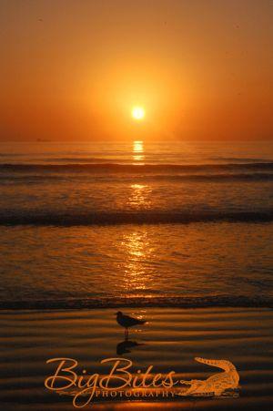 Sunrise-w-Standing-Bird-color-Florida-Beach-Big-Bites-Photography.jpg
