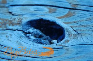 Blue-Wood-with-Knot.jpg