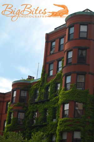 Boston-Building-with-Ivy-Crawling-up-Side.jpg