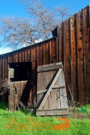 Napa-California-Old-Barn-Door-with-Grass-Big-Bites-Photography.jpg