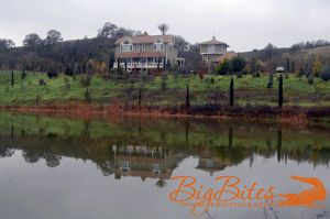 Napa-California-Reflections-in-Pond.jpg