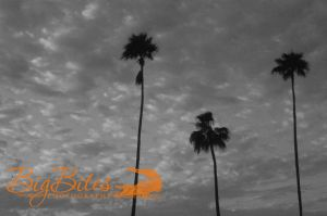 Aperture-Palms-and-Clouds-black-and-white-Tampa-Florida-Big-Bites-Photography.jpg