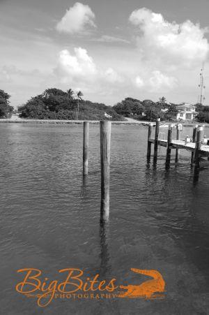 Bahamian-Bird-b-and-w-Big-Bites-Photography.jpg