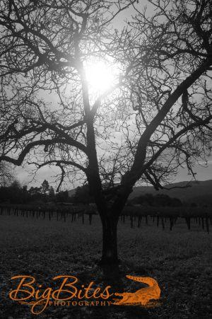 God-Saying-Hello-b-and-w-Napa-Valley-California-Big-Bites-Photography.jpg