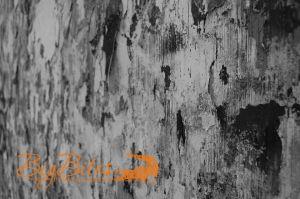 Graffiti-Wall-b-and-w.jpg