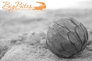 Green-Sphere-b-and-w-Florida-Beach-Big-Bites-Photography.jpg