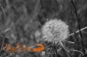 Make-a-Wish-b-and-w-Big-Bites-Photography.jpg
