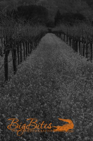 Napa-Vineyard-b-and-w-California-Big-Bites-Photography.jpg