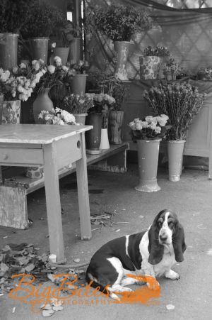 One-of-each,-please,-including-the-Pup-Florence-Italy-Florist-and-dog-Big-Bites-Photography.jpg
