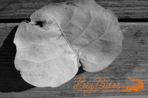 Orange-Leaf,-Brown-Wood-b-a.jpg