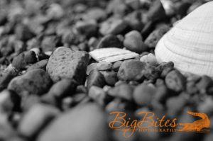 Rocks-and-Shell-b-and-w-Big-Bites-Photography.jpg