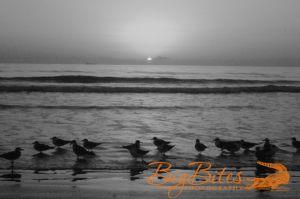 Sunrise-b-and-w-Florida-Beach-Big-Bites-Photography.jpg