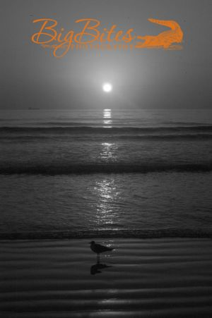 Sunrise-with-Standing-Bird--Florida-beach-Big-Bites-Photography.jpg
