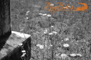 Tombstone-flowers.jpg