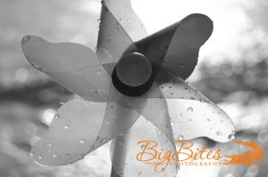Wet-Pinwheel-b-and-w-Florida-Beach-Big-Bites-Photography.jpg