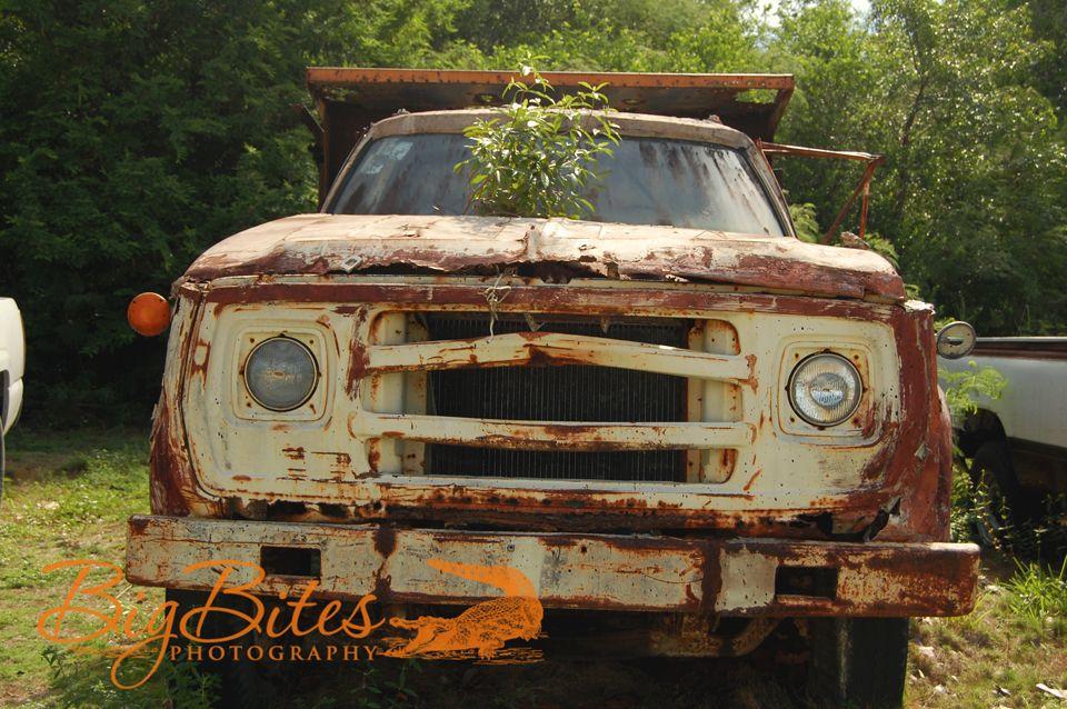 Truck-and-tree-Bahamas-Big-Bites-Photography.jpg
