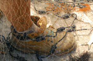 Fish-Feet-and-net-in-Florida.jpg