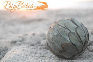 Green-Sphere-color-Florida-Beach-Big-Bites-Photography.jpg
