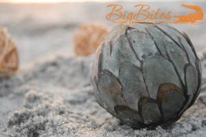 Multiple-Spheres-color-Florida-Beach-Big-Bites-Photography.jpg