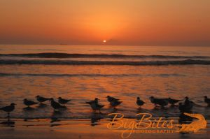 Sunrise-color-Florida-Beach-Big-Bites-Photography.jpg