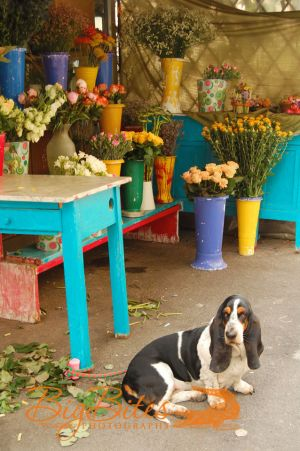 One-of-each,-please,Florence-Italy-Florist-and-Dog-Big-Bites-Photography.jpg