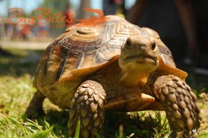 tortoise-moving-color-Big-Bites-Photography.jpg