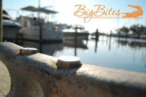 Boats-in-Back-color-Big-Bites-Photography.jpg