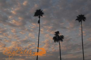 Aperture-Palms-and-Clouds-Tampa-Florida-Big-Bites-Photography.jpg