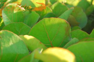 Beach-Leaves-Florida-Big-Bites-Photography.jpg