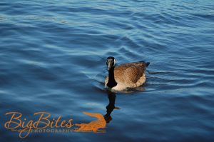 Boston-Bird-Big-Bites-Photography.jpg