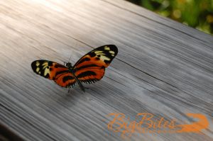Butterfly-on-Wood-2-color-Big-Bites-Photography.jpg