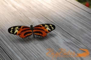 Butterfly-on-Wood-Big-Bites-Photography.jpg