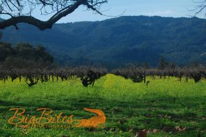 Mustard-Flowers-Napa-Valley-California-Big-Bites-Photography.jpg