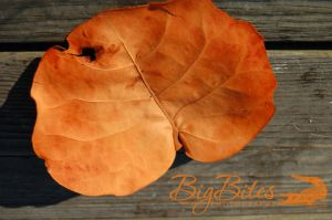 Orange-Leaf,-Brown-Wood-Big-Bites-Photography.jpg
