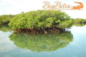 Tree-Reflection-color-Bahamas-Big-Bites-Photography.jpg