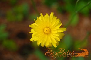 yellow-flower-color-Big-Bites-Photography.jpg